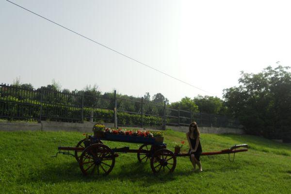 poseta-kragujevcu-2324D69F97-8774-15F4-76C0-59BE1E00BA4D.jpg